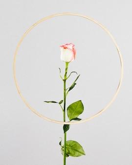 Rosa com moldura dourada redonda