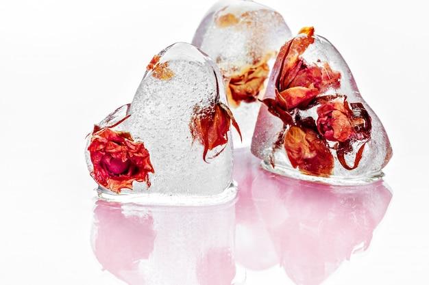 Rosa congelada em cubos de gelo