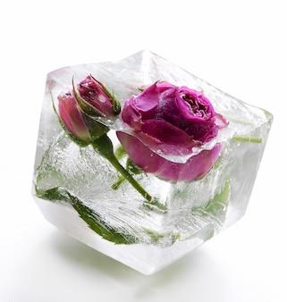 Rosa congelada