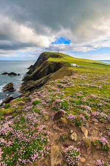Rosa do mar no penhasco sob o céu azul, shetland, escócia