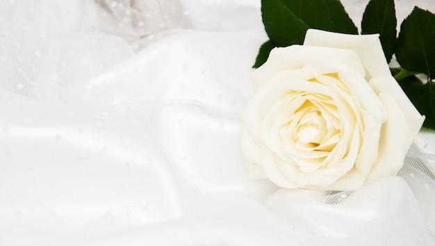Rosa em fundo branco de seda