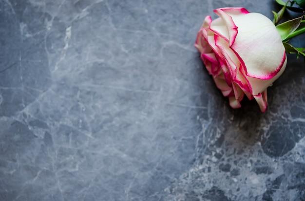 Rosa em fundo de mármore escuro com lugar para texto. lay plana.