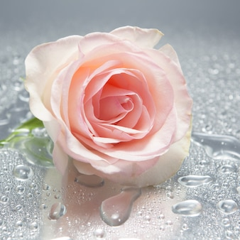 Rosa em fundo molhado