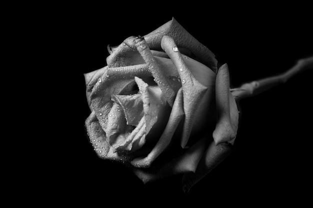 Rosa em preto e branco.