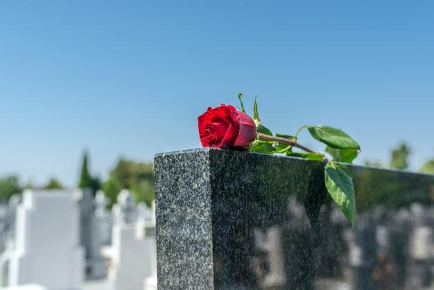 Rosa, em, um, cemitério, com, lápide