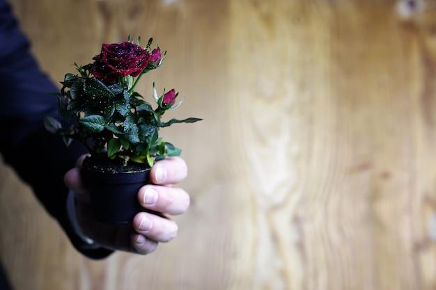 Rosa em uma mão homem