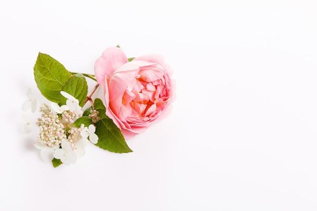 Rosa flor festiva rosa, composição de hortênsia, quadro. vista superior aérea, configuração plana. copie o espaço. aniversário, mãe, dia dos namorados, mulheres, conceito do dia do casamento.