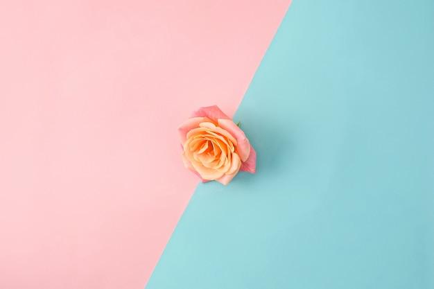 Rosa na superfície moderna colorida