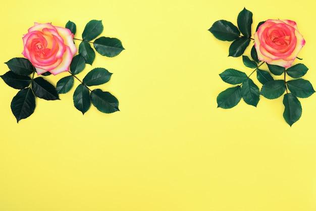 Rosa rosa com pétalas verdes
