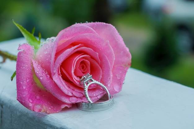 Rosa rosa e anel de casamento