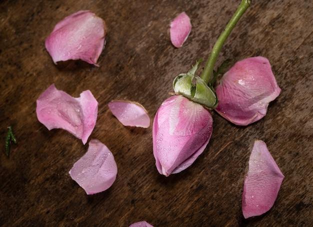 Rosa rosa e pétalas em um fundo de madeira
