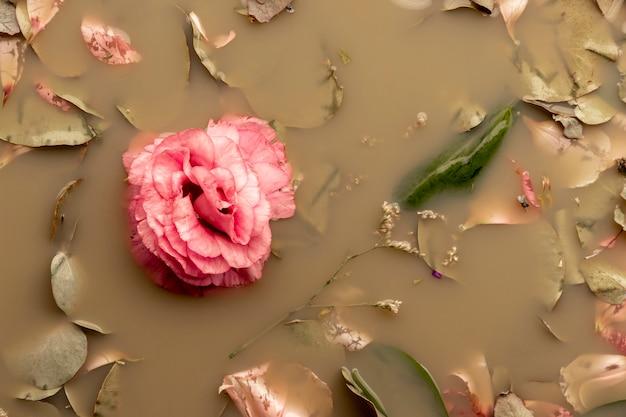 Rosa rosa em água de cor castanha
