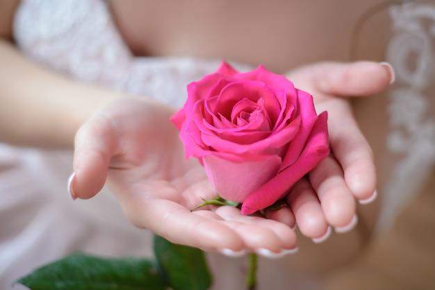 Rosa rosa nas mãos da noiva closeup