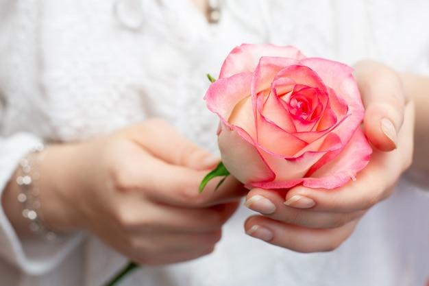 Rosa rosa nas mãos de uma ga rosa rosa nas mãos de uma mulher. mãos lindas. um presente para o seu amado.