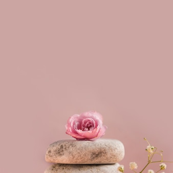Rosa rosa sobre a pilha de pedras contra um fundo colorido