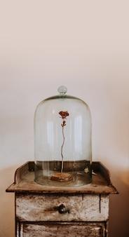 Rosa secada sob um sino de vidro.
