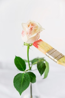 Rosa, sendo, pintado, com, escova, em, cor vermelha