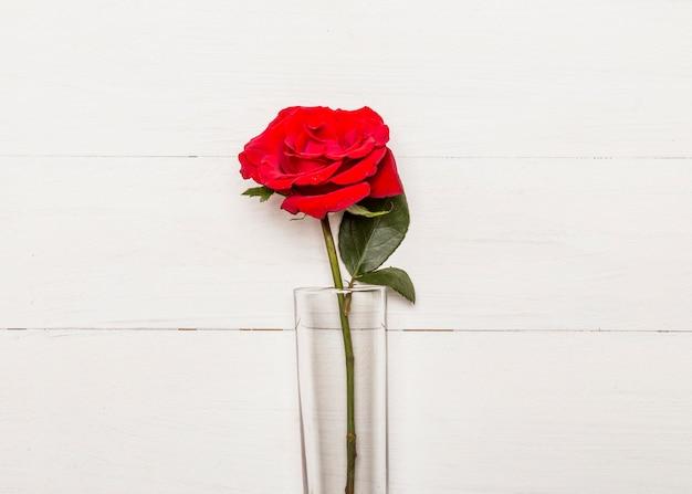 Rosa vermelha brilhante em vidro na superfície branca