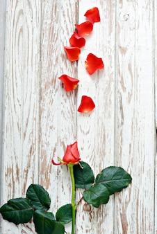 Rosa vermelha com pétalas em um fundo branco e envelhecido