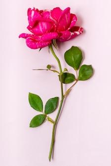 Rosa vermelha de close-up com folhas verdes