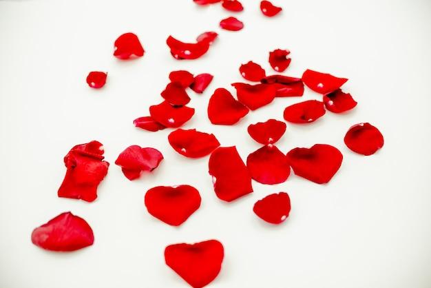 Rosa vermelha deixa o dia da mulher