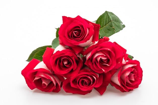 Rosa vermelha em branco