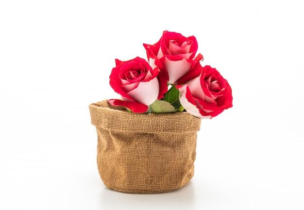 Rosa vermelha em fundo branco