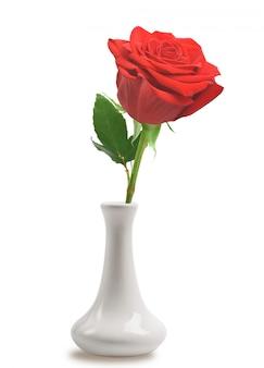 Rosa vermelha em vaso