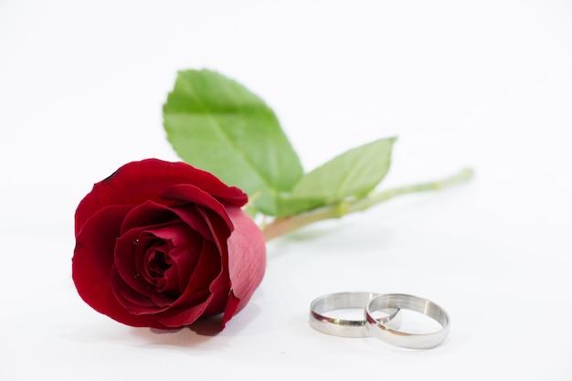 Rosa vermelha, envolver o anel com amor no dia dos namorados