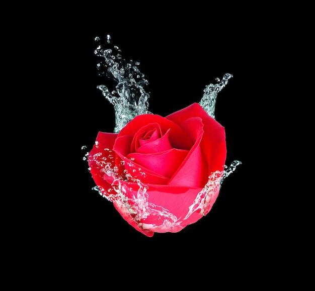 Rosa vermelha na água em preto