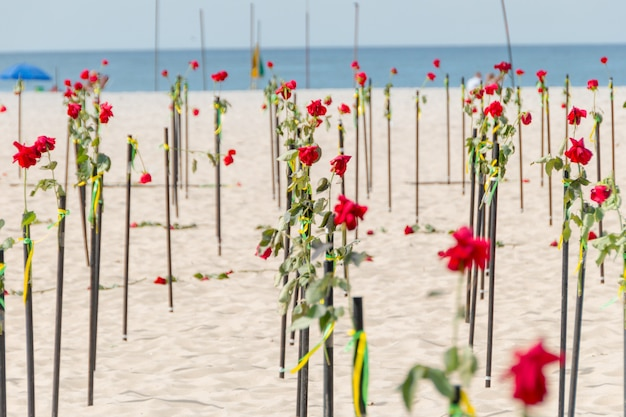 Rosa vermelha na areia da praia de copacabana no rio de janeiro, brasil.