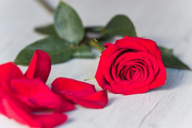 Rosa vermelha, na mesa de madeira, copie o espaço