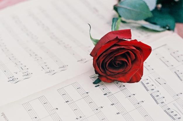 Rosa vermelha nas notas musicais