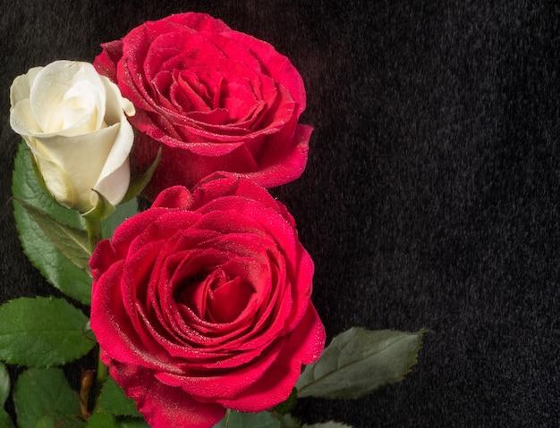 Rosas brancas e vermelhas em preto com efeito de chuva enevoada.