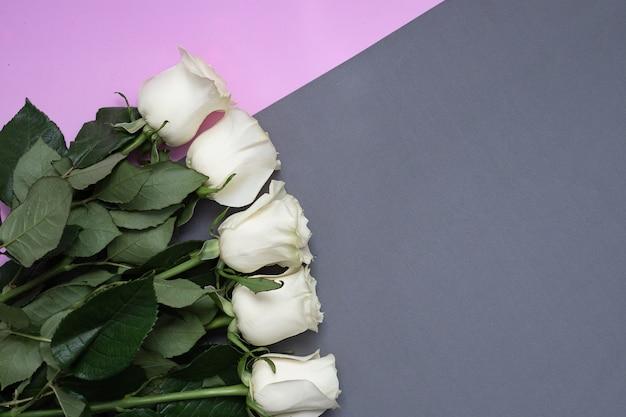 Rosas brancas em uma mesa cinza e rosa com copyspace.