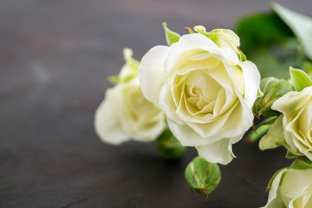 Rosas brancas florescendo em um fundo escuro.