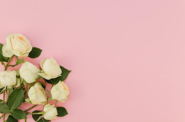 Rosas brancas românticas com espaço de cópia
