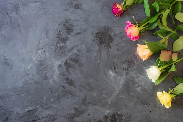 Rosas coloridas em fundo cinza