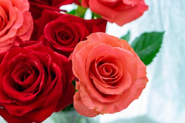 Rosas com uma haste verde em um vaso transparente em uma cortina branca