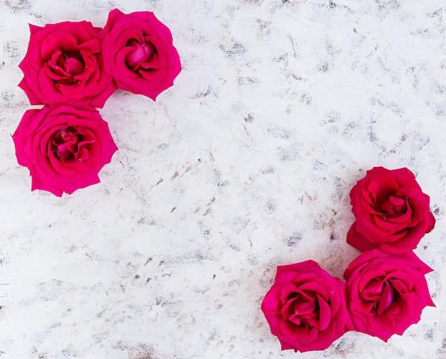 Rosas cor de rosa em branco
