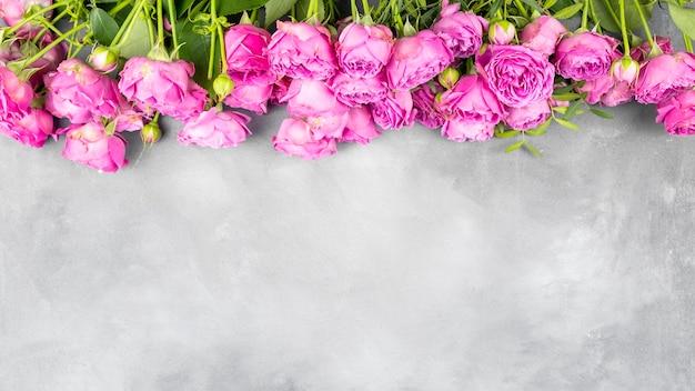 Rosas cor de rosa em fundo cinza com espaço de cópia.