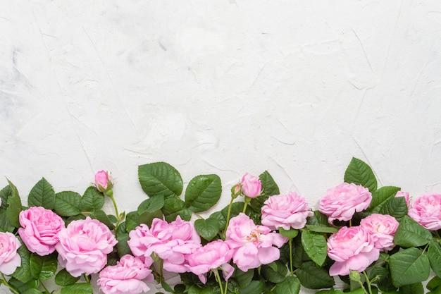 Rosas cor de rosa em uma pedra clara. vista plana, vista superior