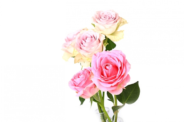 Rosas cor de rosa, isoladas no fundo branco seletivo foco suave