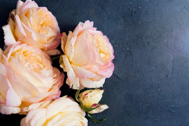 Rosas de jardim cor-de-rosa amarelas bonitas em uma superfície concreta azul escura. copie o espaço