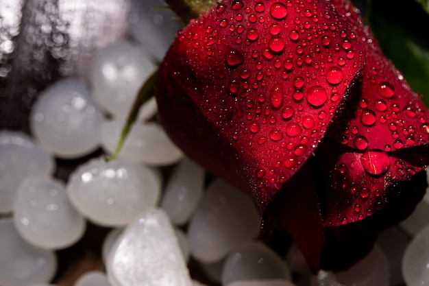 Rosas, dia dos namorados, fevereiro de amor