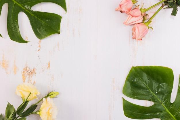 Rosas e folhas de monstera no pano de fundo branco grunge