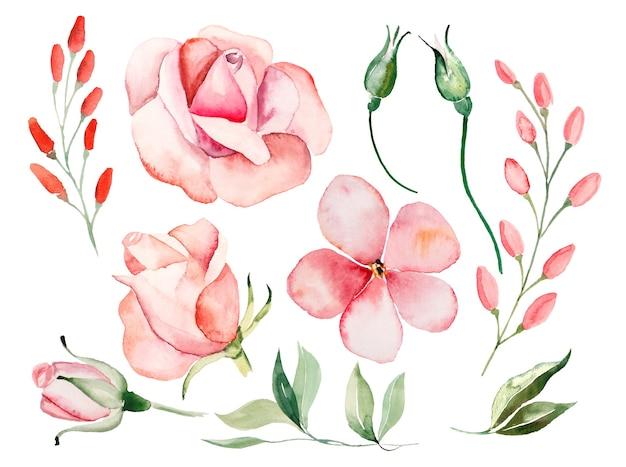 Rosas em aquarela, flores vermelhas e folhas verdes ilustrações
