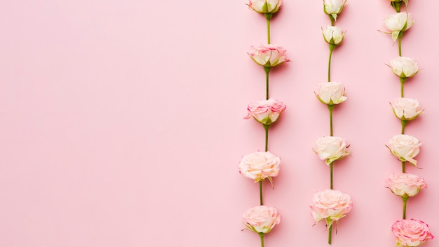 Rosas em linhas e colunas vista superior com espaço de cópia