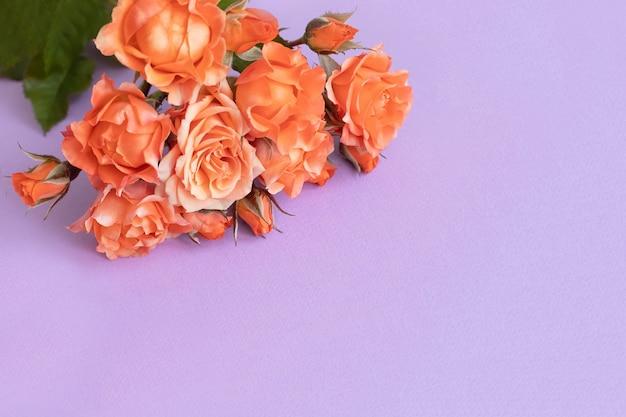 Rosas em um delicado fundo lilás. copie o espaço