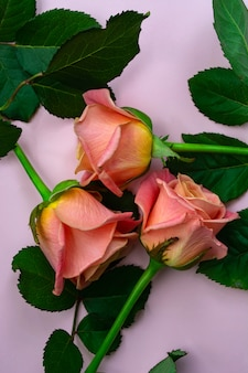 Rosas frescas e delicadas